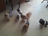 OVERNIGHT DOG CARE IN BOYNTON BEACH. MY BFF PET SITTING. BOYNTON BEACH PET SITTING.